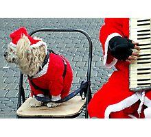 Oh,not again..Jingle bells Photographic Print