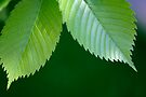 New Leaves - Untouched by Gene Walls