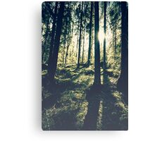 Sunlight in the woods 2 Canvas Print