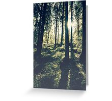 Sunlight in the woods 2 Greeting Card