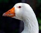 Baby Blue Eyed Goose by Gene Walls