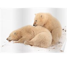 Polar bear cubs Poster