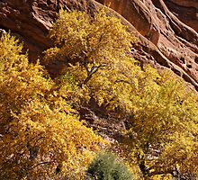 Red Rocks Fall Colors by Michael Kirsh