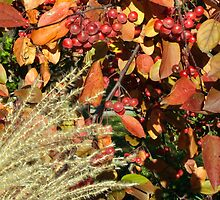 Autumn Crabapples & Tall Grass In The Wind by Gene Walls