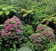 Wild Rhododendrons New Zealand by Margaret  Hyde
