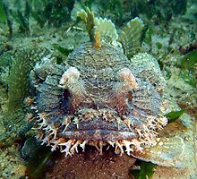 Frog Fish by peterperry