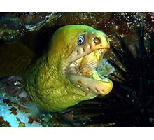 Mooray Eel Photographic Print