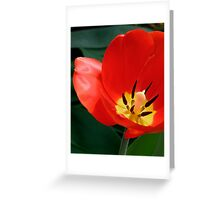Nature's Silky Perfection Greeting Card