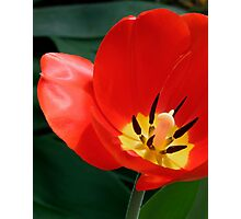 Nature's Silky Perfection Photographic Print