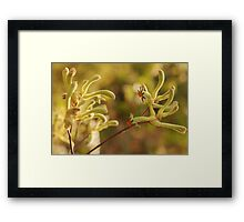 colours of the south west Framed Print