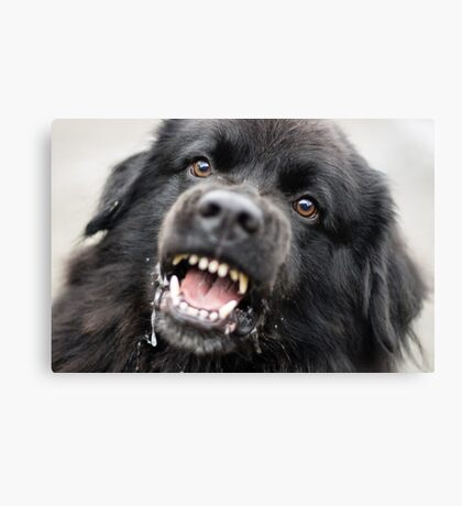 Give me that cookie, NOW!!! Canvas Print