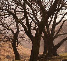 Dove Stone Trees by Rachel Down