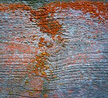 Lichen # 42 by Frederick James Norman