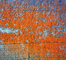 Lichen # 44 by Frederick James Norman