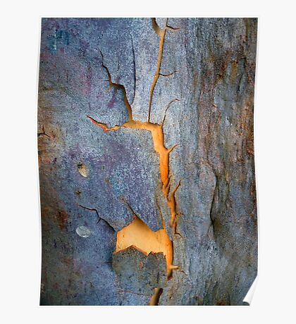 Bark Abstract # 13 Poster