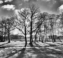 Through the Trees by MatthewWardle