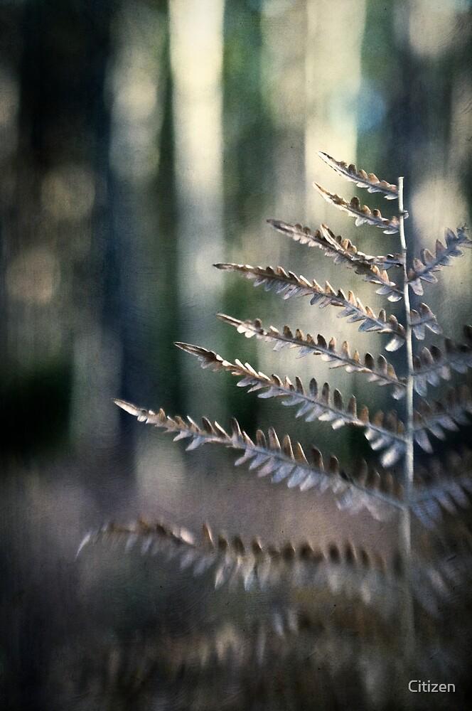 Winter Fern by Nikki Smith