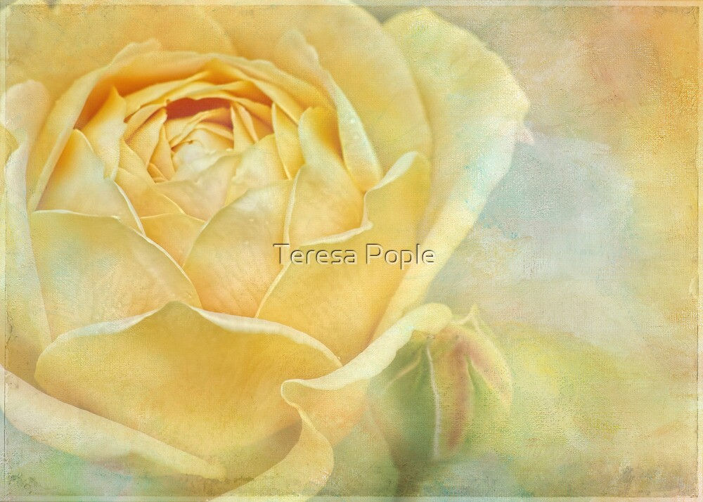 summer show by Teresa Pople