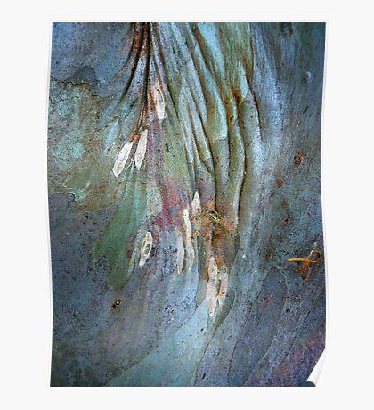 Bark Abstract # 15 Poster