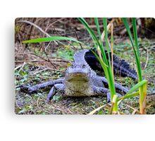 Alligator Posing Canvas Print