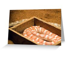 Snake-In-A-Box ...and one out Greeting Card