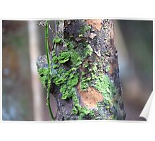 Mossy Branches Poster