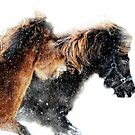 Winter racing by Alan Mattison