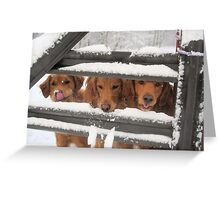 Trio Of Goofy Golden Retrievers Greeting Card