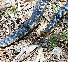 Tiger Snake by mncphotography