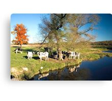 Gathering at the Scratchin' Tree Canvas Print