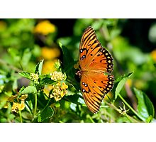 Wings of the Gulf Fritillary Butterfly Photographic Print
