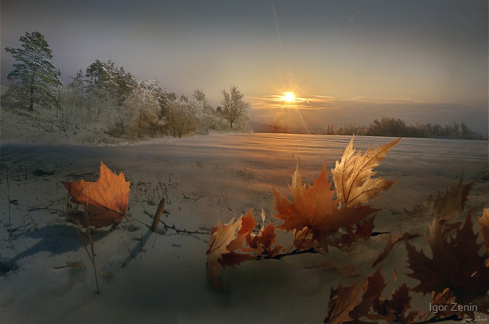 Winter Sun by Igor Zenin
