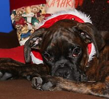 My underwhelmed puppies first Christmas by Jeanette Muhr