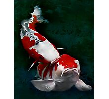 Koi fish (kissing) Photographic Print
