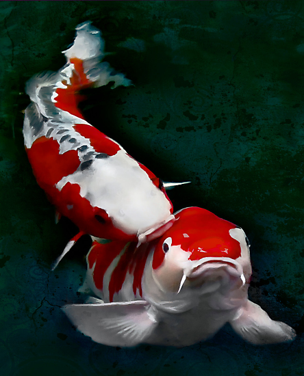 Koi fish (kissing) by Yves Rubin