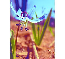 Blue Wildflower Photographic Print