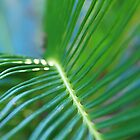 Frond by Hayley R. Howard