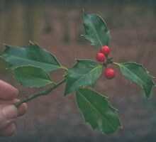 Have some holly... by Fiona Jones