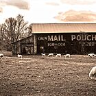 MAIL POUCH TOBACCO BARN AND SHEEP by Randy & Kay Branham