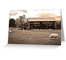MAIL POUCH TOBACCO BARN AND SHEEP Greeting Card