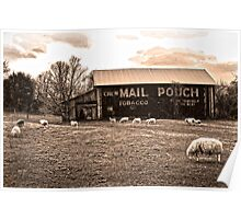 MAIL POUCH TOBACCO BARN AND SHEEP Poster