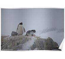 Penguin 002 Poster