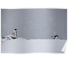 Penguin 003 Poster