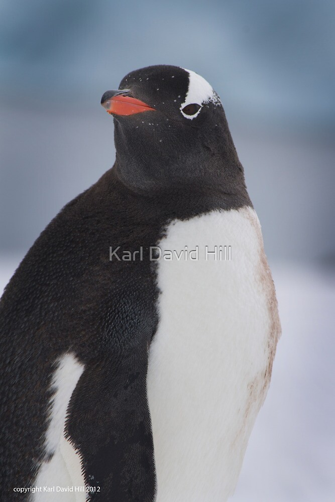Penguin 004 by Karl David Hill