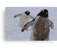 Penguin 005 Canvas Print