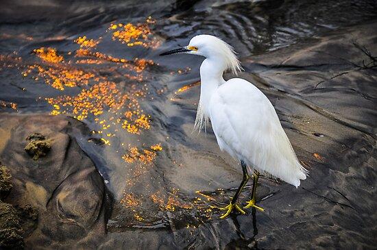 White Crane Bird by Reese Ferrier