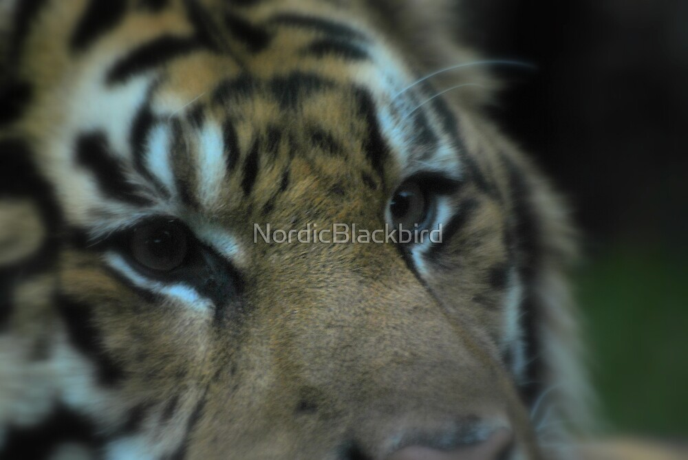 Jae Jae's eyes  by NordicBlackbird