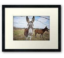 Humble Little Burro Framed Print