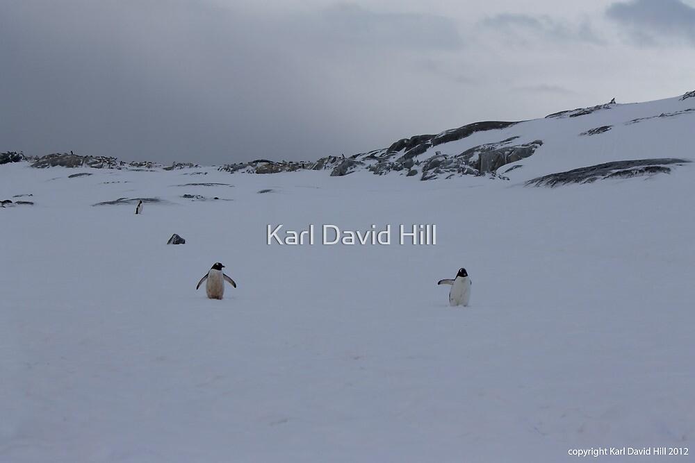 Penguin 008 by Karl David Hill