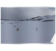 Penguin 008 Poster